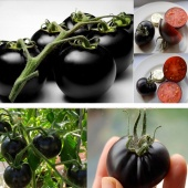 Rare Seeds Tomato Black Cherry Russian Heirloom Vegetable Seed