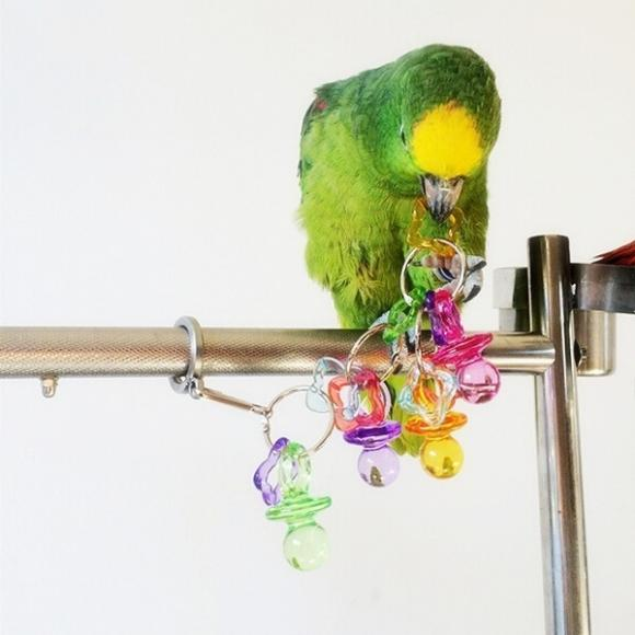 Acrylic MultiColor Colorful Pet Bird Parrot Toy Lovebird Cage Budgie Chew Play Toys Home Decor